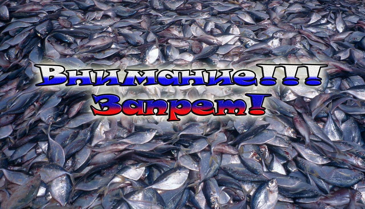 ограничило вылов рыбы