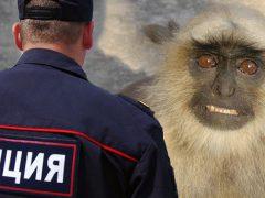 фотоживодёры Судак и полиция