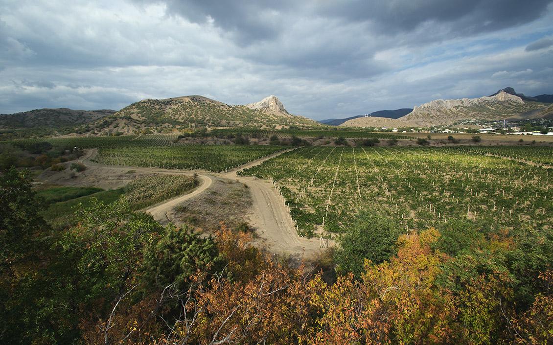 виноградники в Судаке