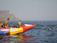 на банане к дельфинам